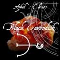 AZHAD'S ELIXIRS Black Cavendish